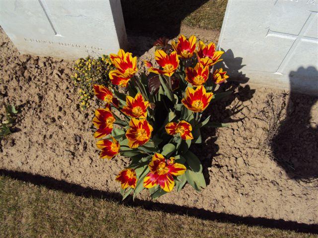 Closeup of graveside tulips